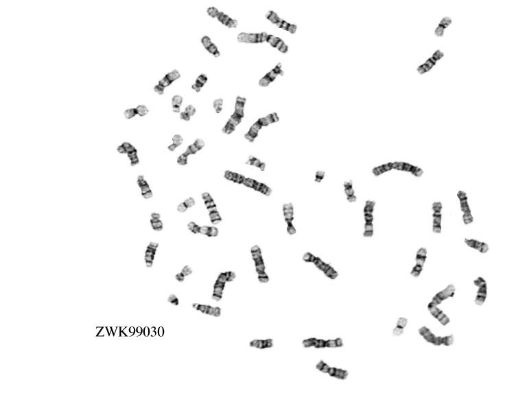 ZWK99030.jpeg